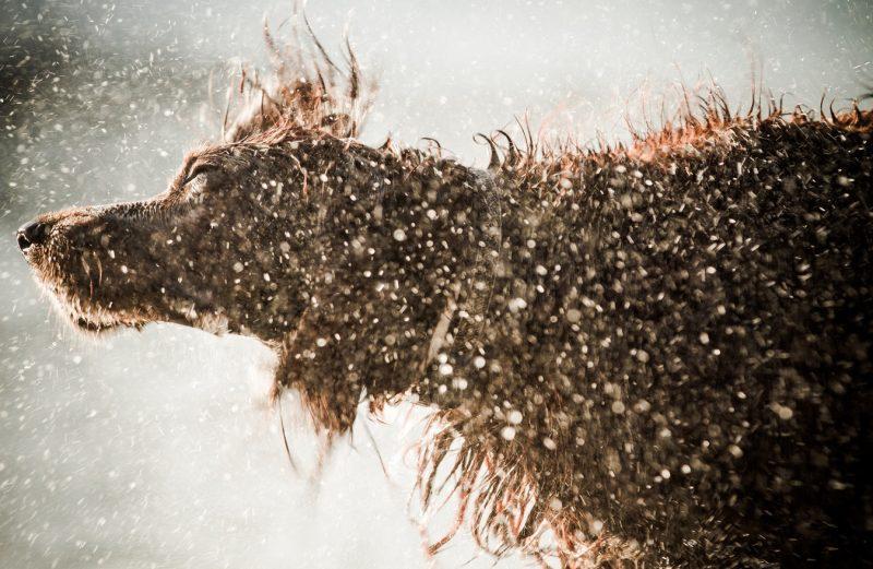zandbak-schelp-hond